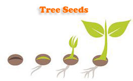 Tree Seeds Online