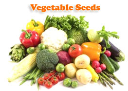 Vegetable Seeds Online