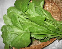 Palak Leaves-Vegetables Seeds